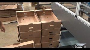 Tray Packaging - tray box